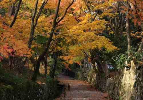 湖東三山 百済寺2
