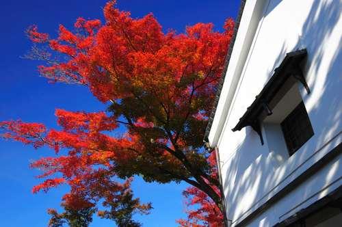 京都 高台寺 青空に紅葉映え